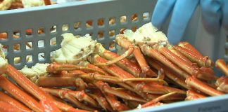 Pêche Crabes