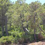 promotion des communes forestières